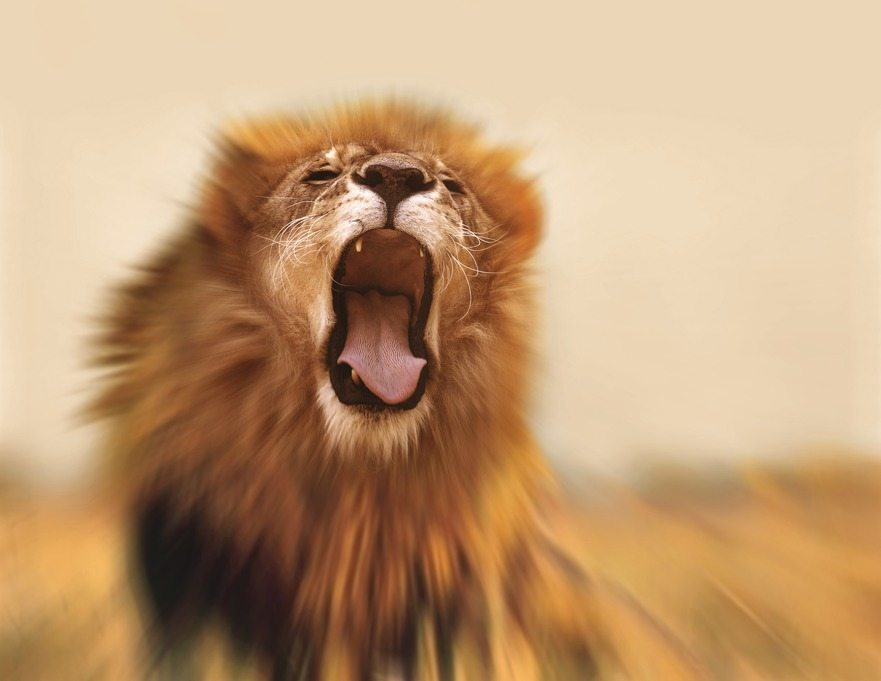 fear-fortitude-lion-roaring
