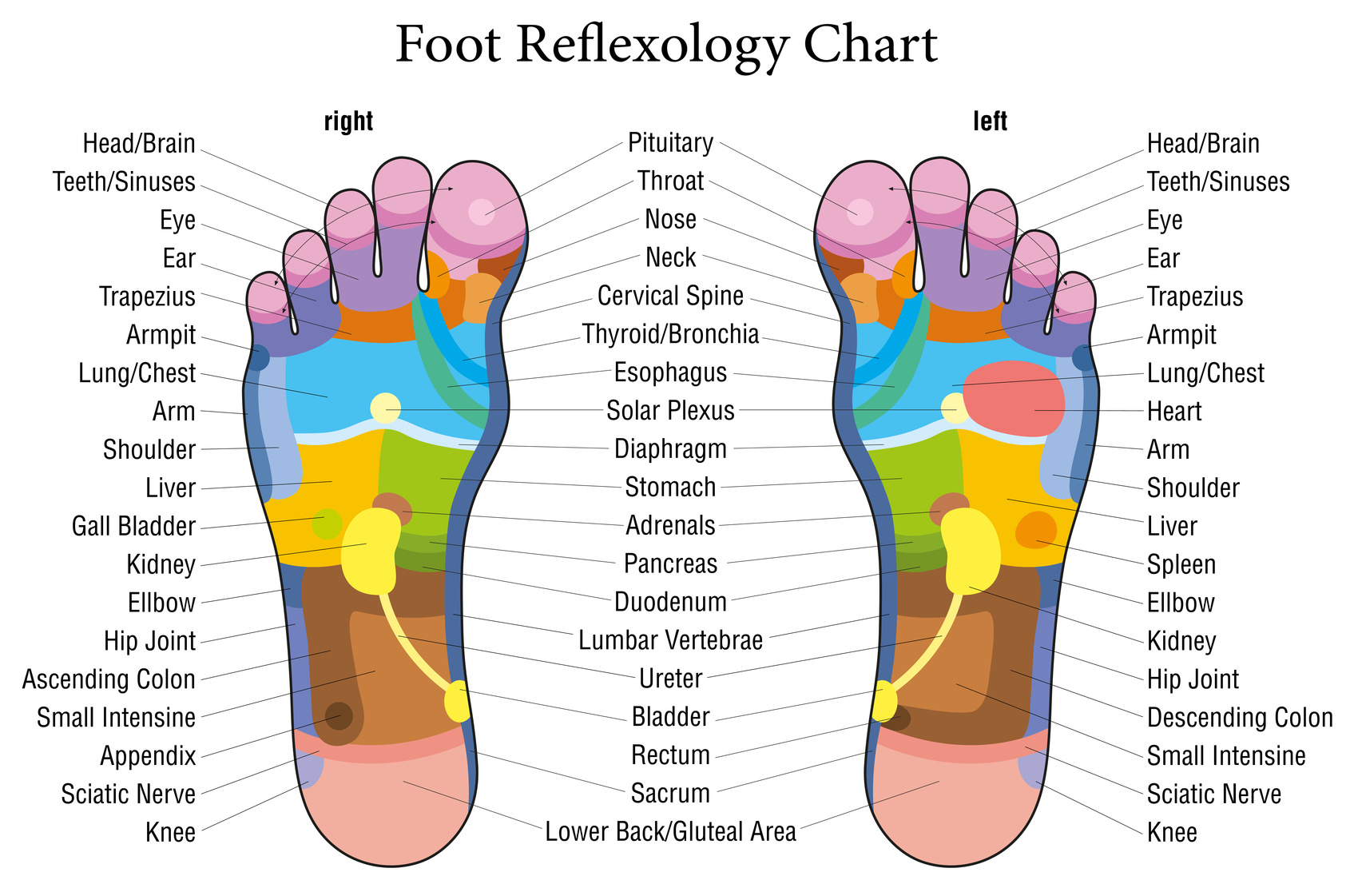 foot chart: This is what happens when you touch these points on your feet