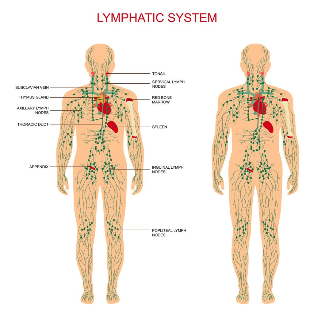 10 ways to clean your lymphatic system, Human Body