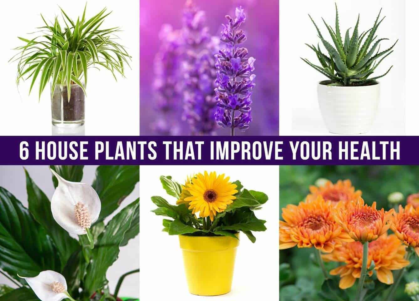 6 House Plants That Improve Your Health
