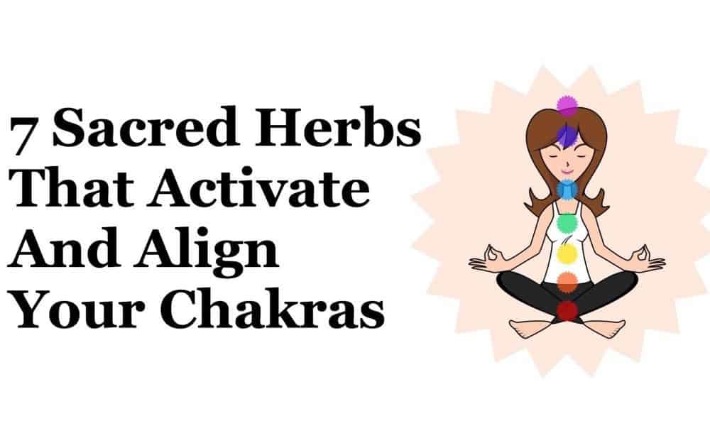7 Sacred Herbs That Activate And Align Your Chakras