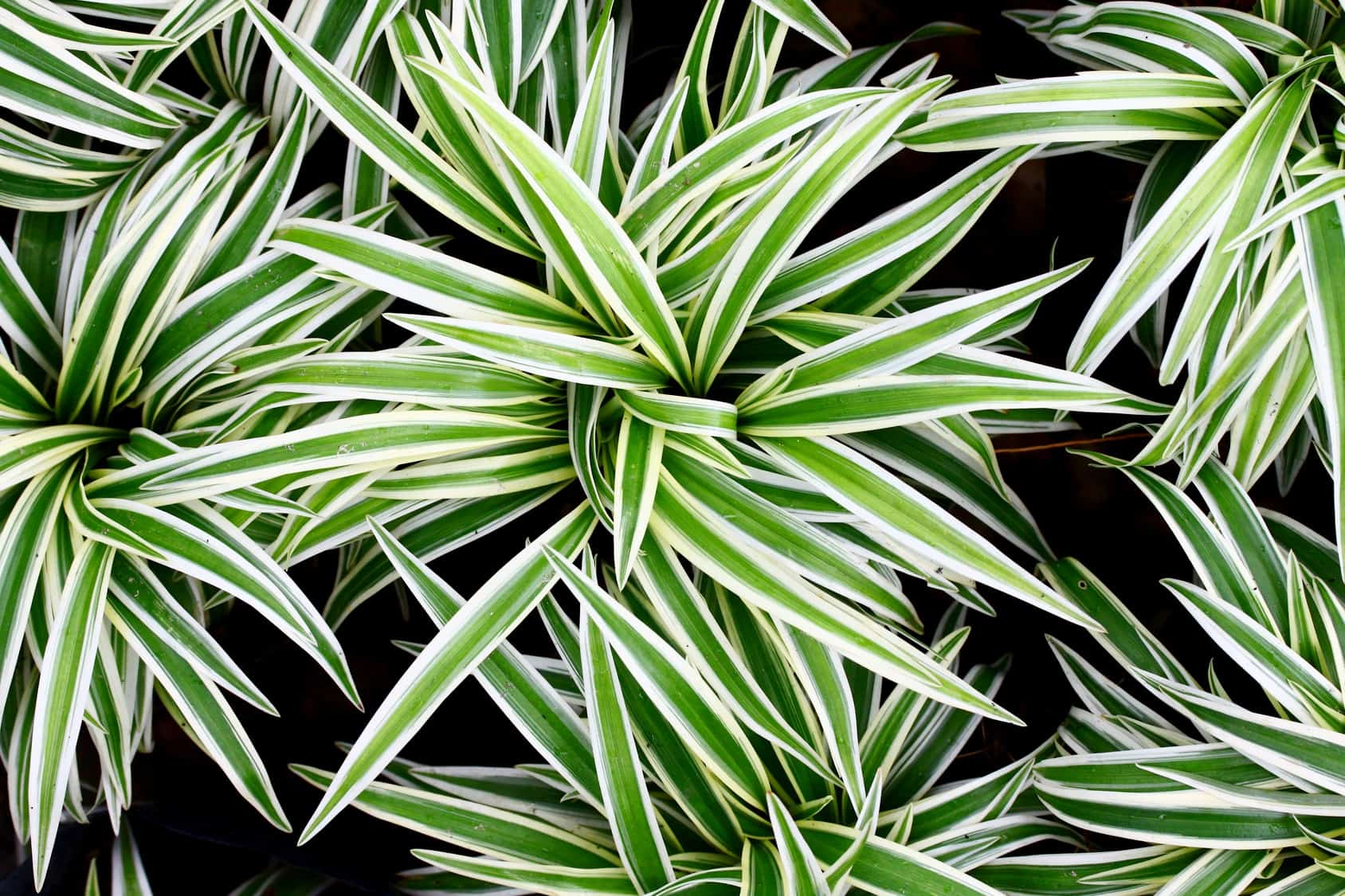Cleaner Indoor Air Plants