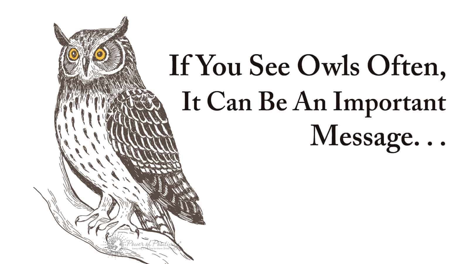If You See Owls Often This Is What It Means