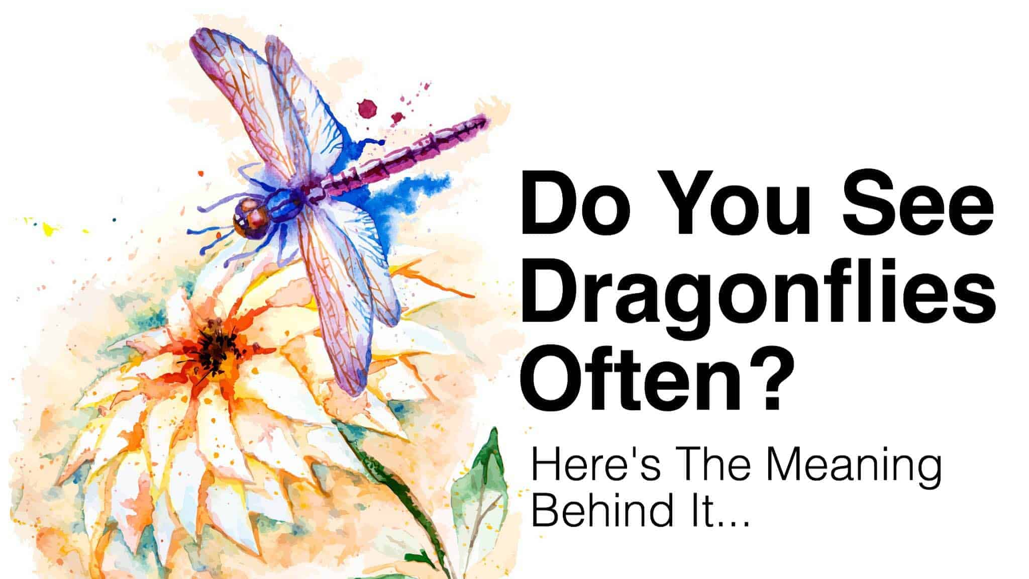 do you see dragonflies often this is what it means