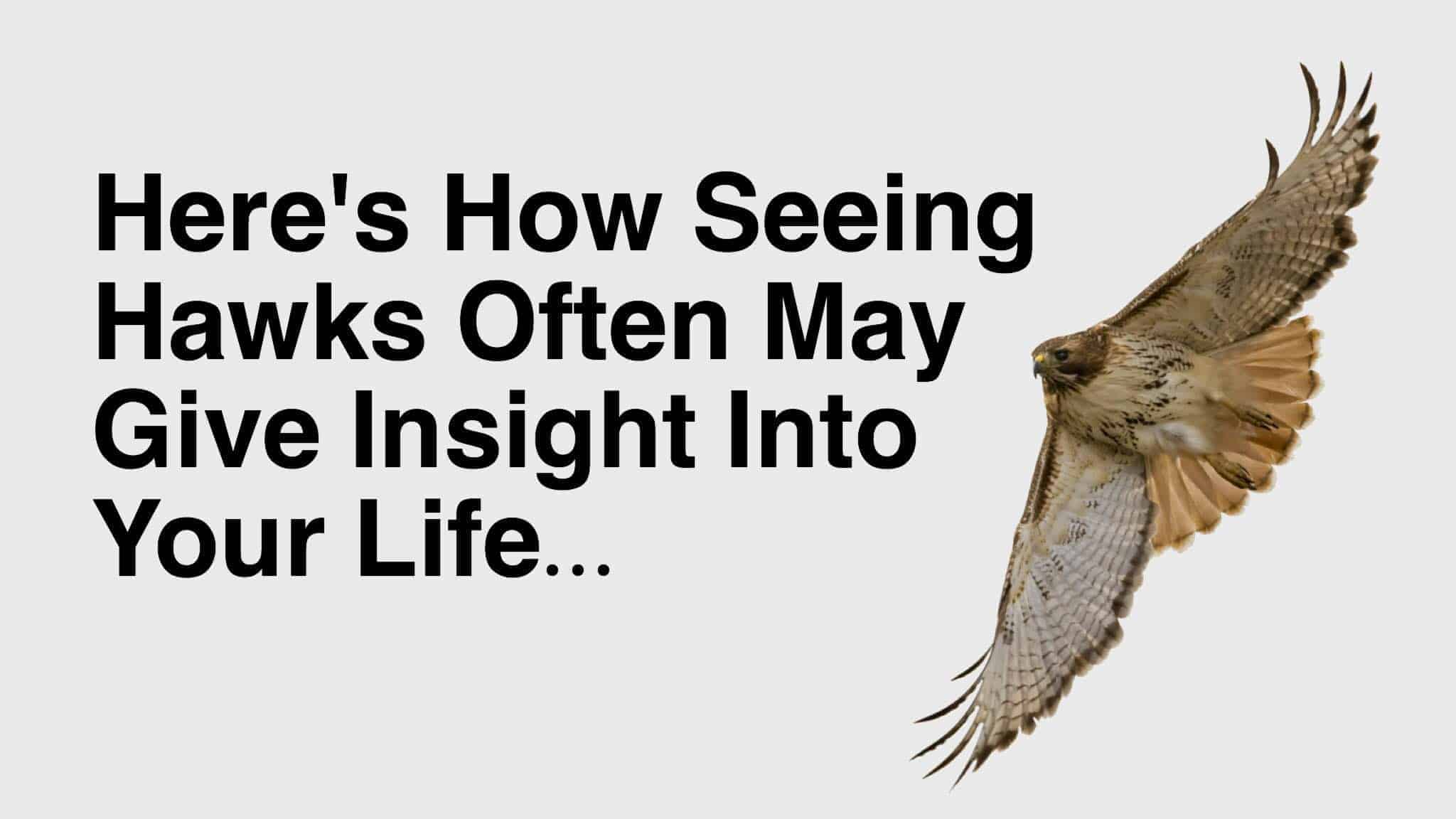 Heres How Seeing Hawks Often May Give Insight Into Your Life