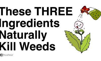 naturally kill weeds