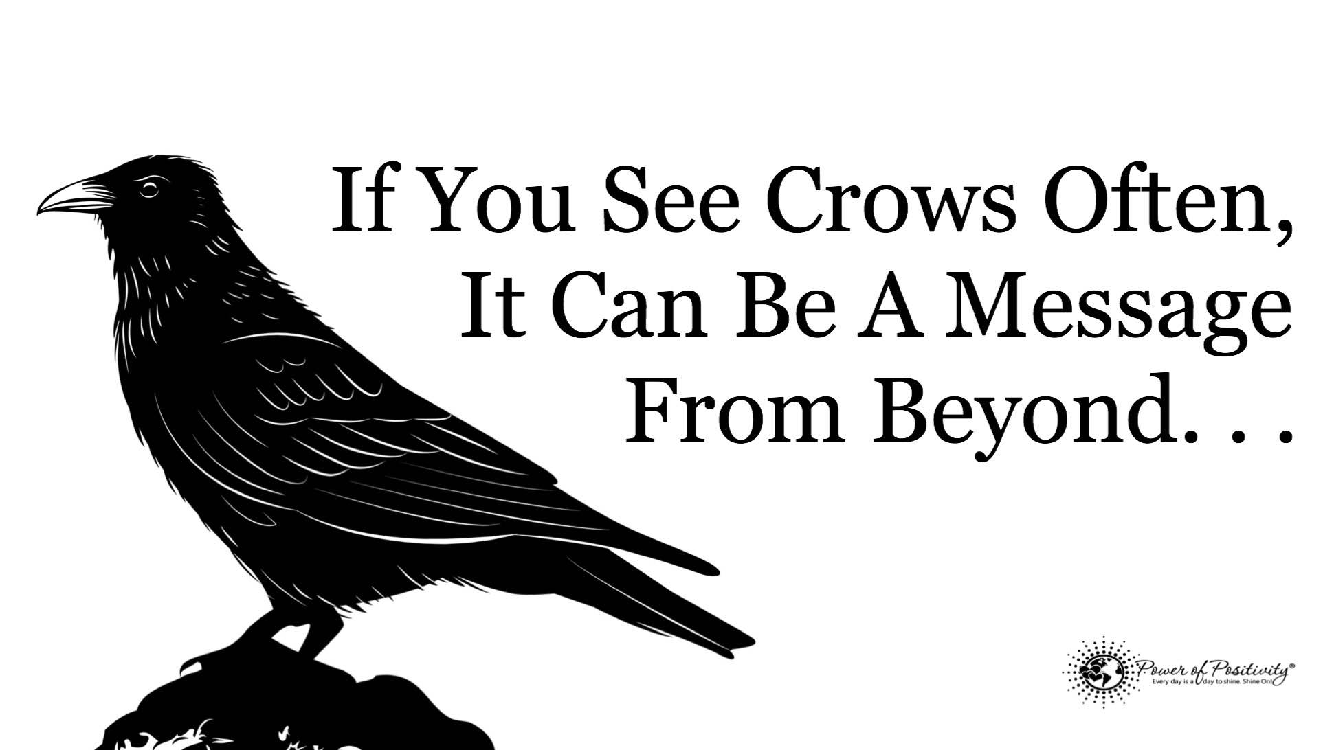 If You See Crows Often This May Be Why