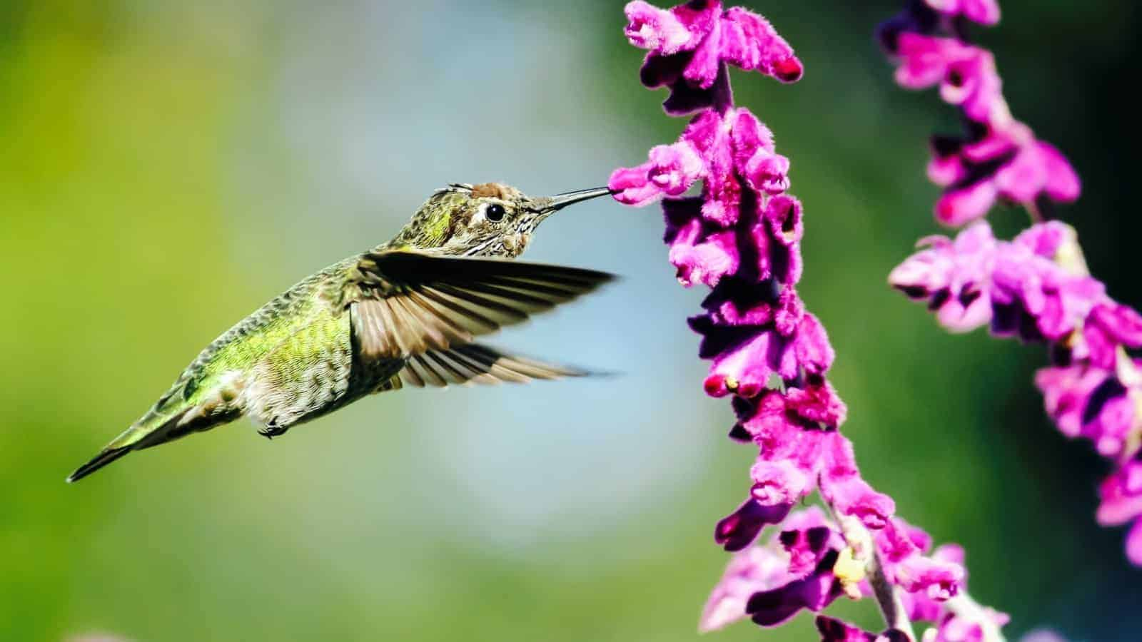 8 Spiritual Messages Hummingbirds Are Trying To Send You