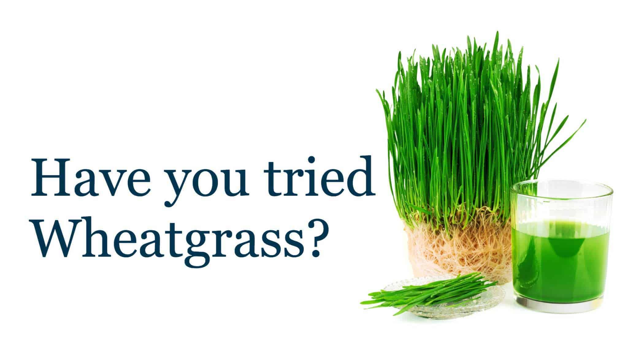 What happens when you drink wheatgrass shot