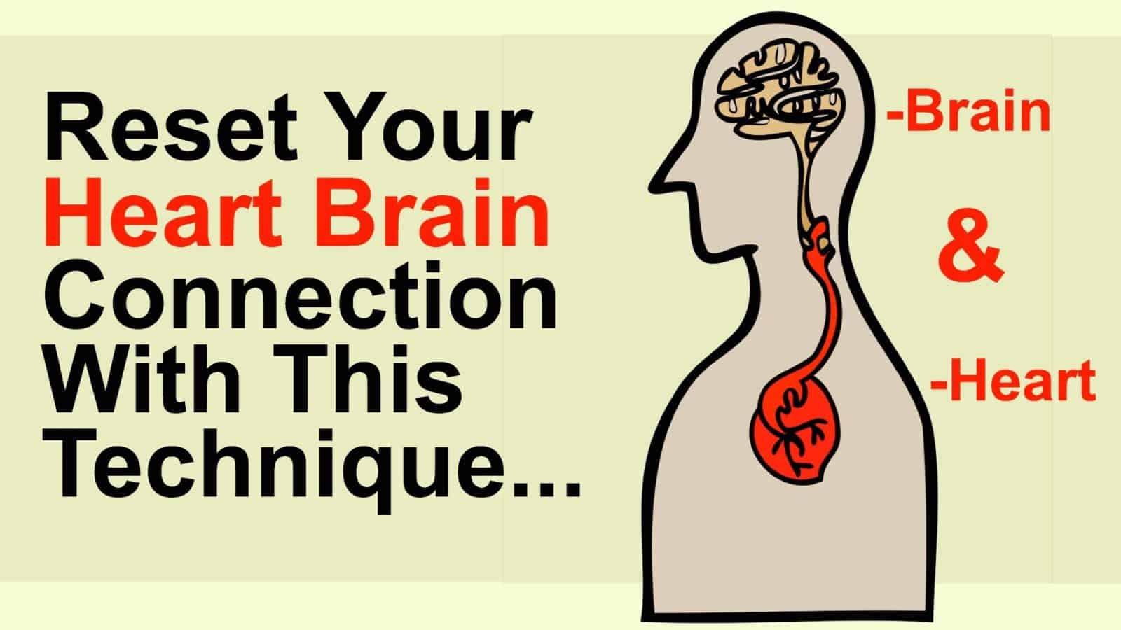 heart brain connection