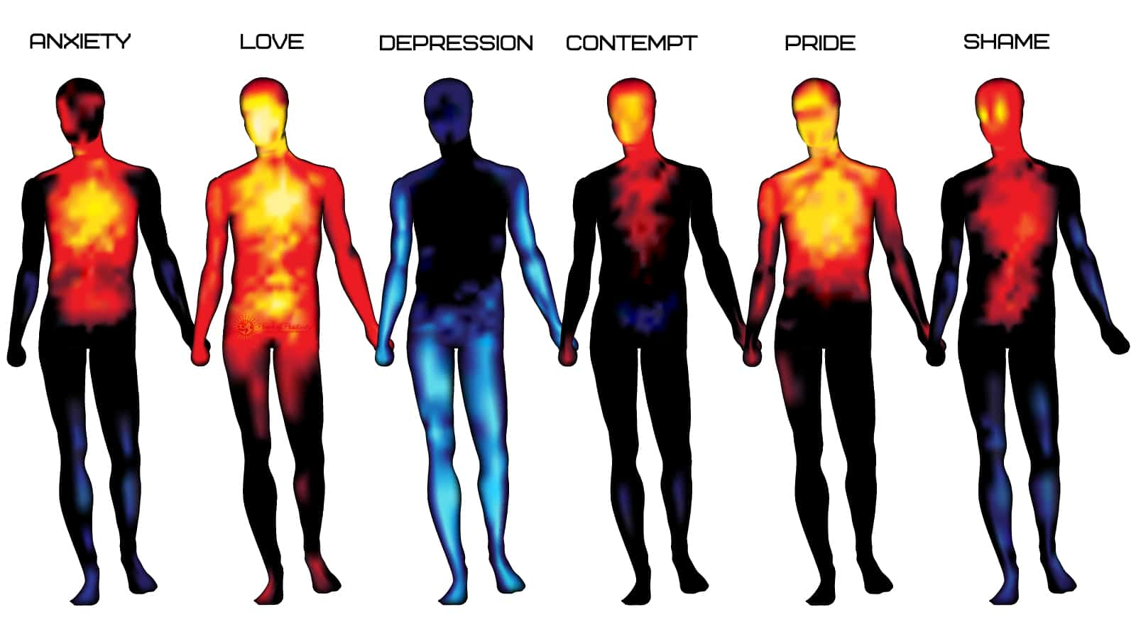 Heatmaps Reveal Where People Feel Emotions On The Body