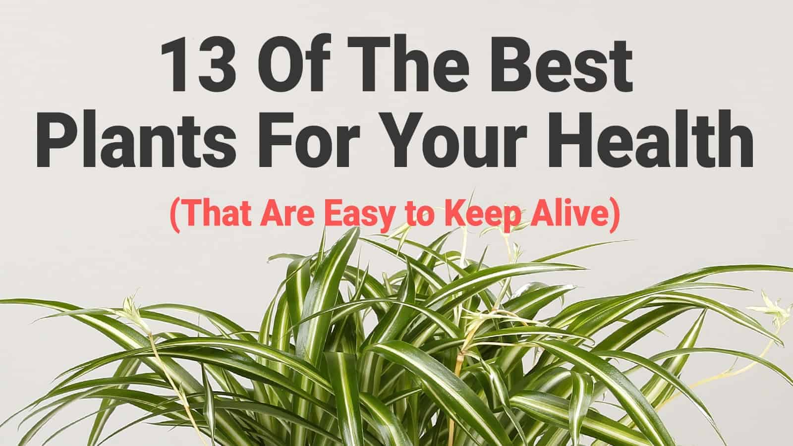 plants for your health