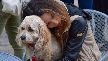 losing a dog