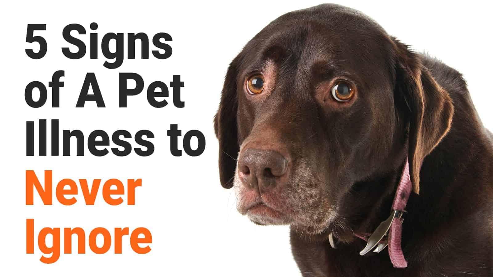 pet illness