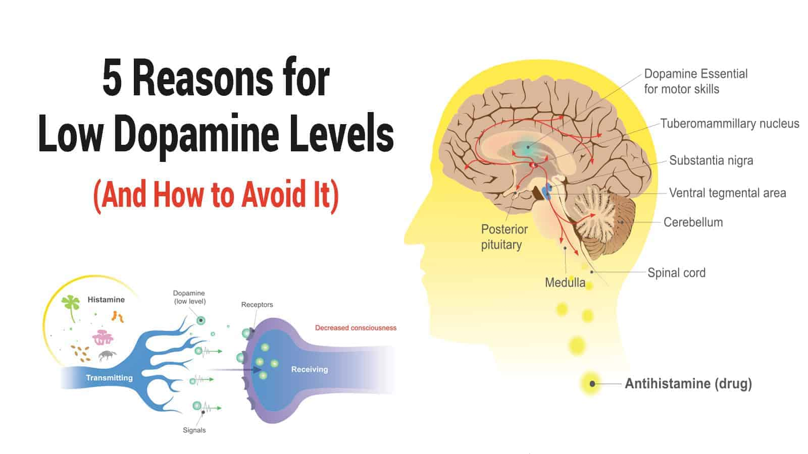 5 Reasons for Low Dopamine Levels (And How to Avoid It) »