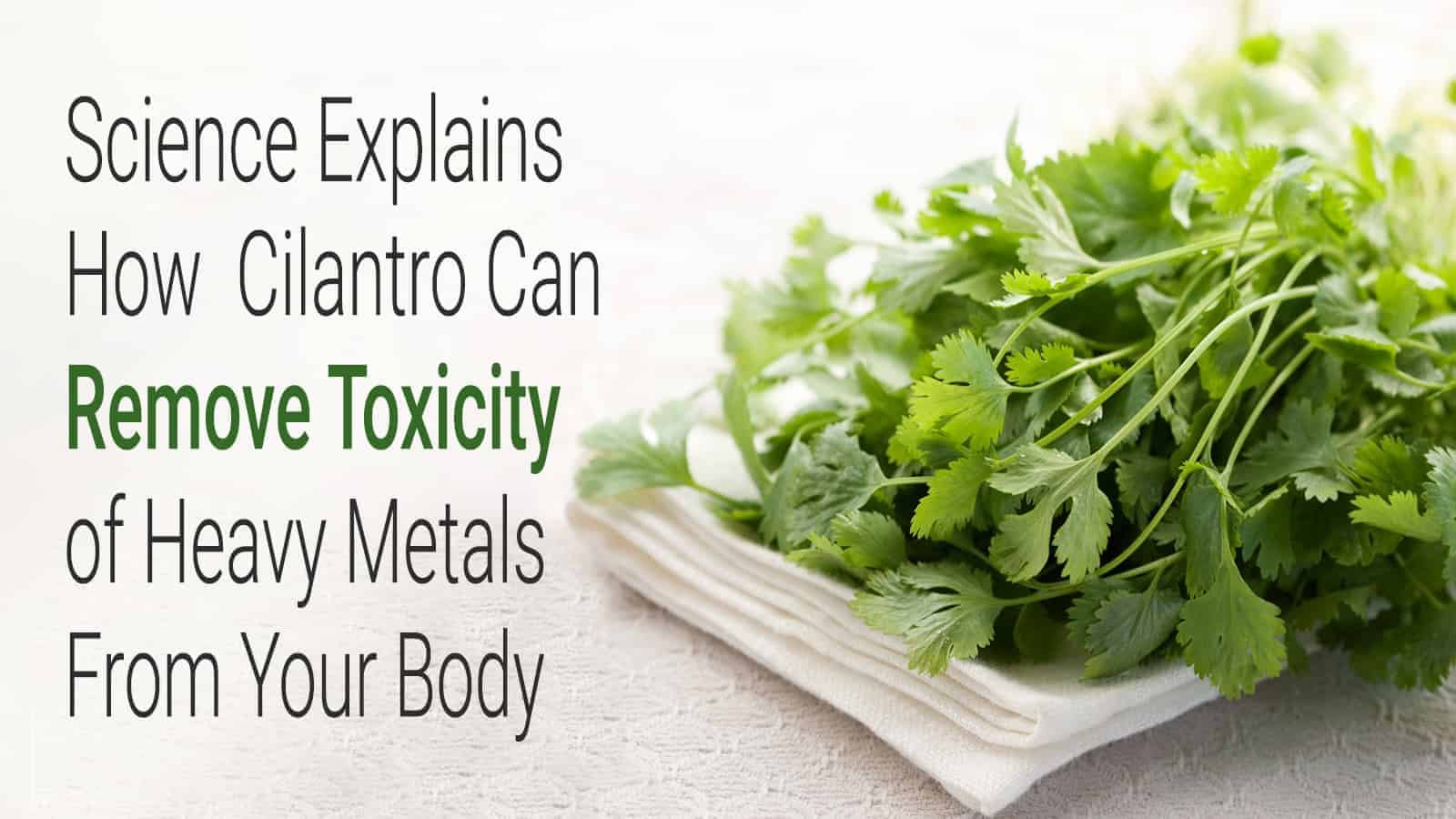 cilantro heavy metals
