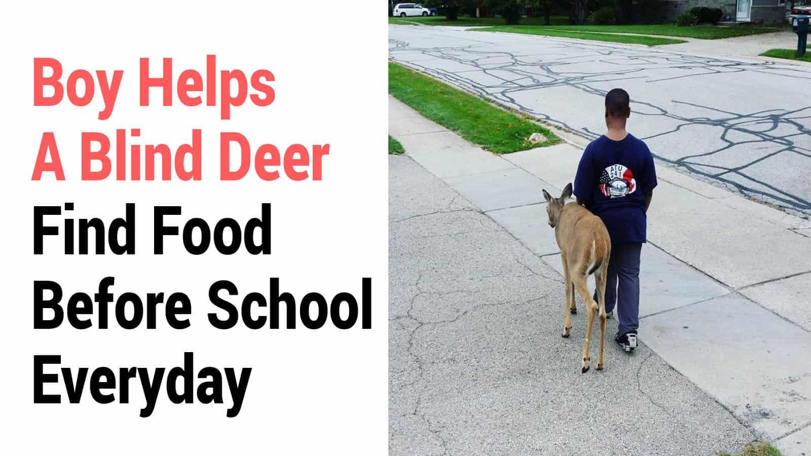 blind deer