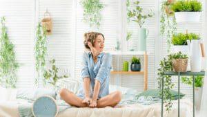 Ficus - indoor plants