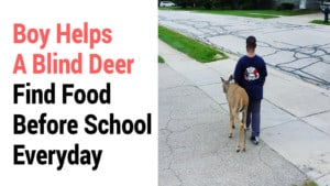 kindness to local animal shelter