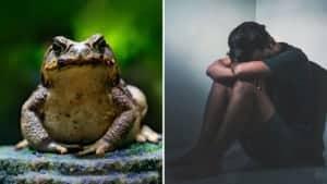 toad poison and serotonin