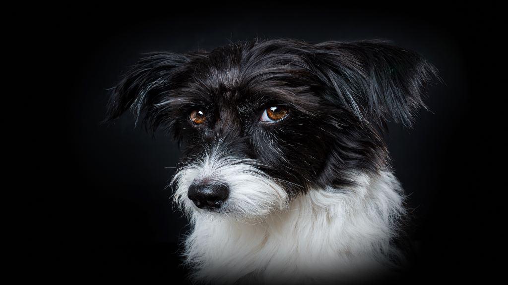 best friend dog featured