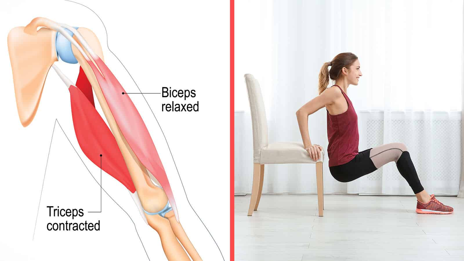 defined triceps