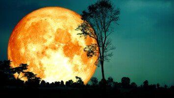 moon omens