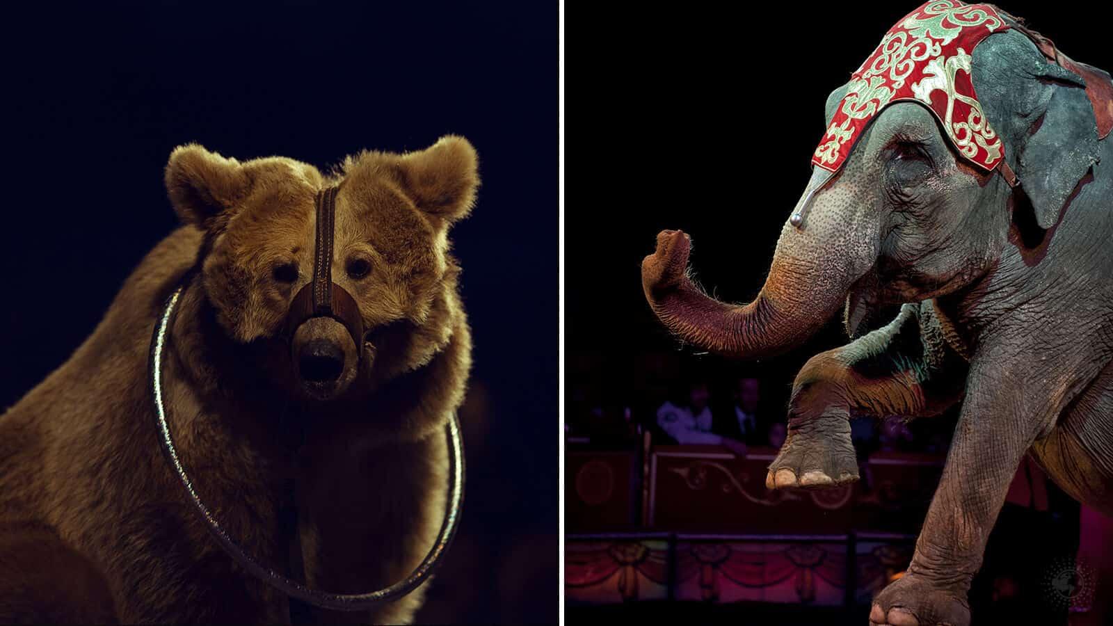 banning circus animals