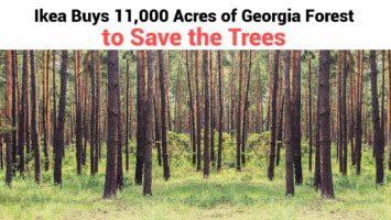 georgia forest