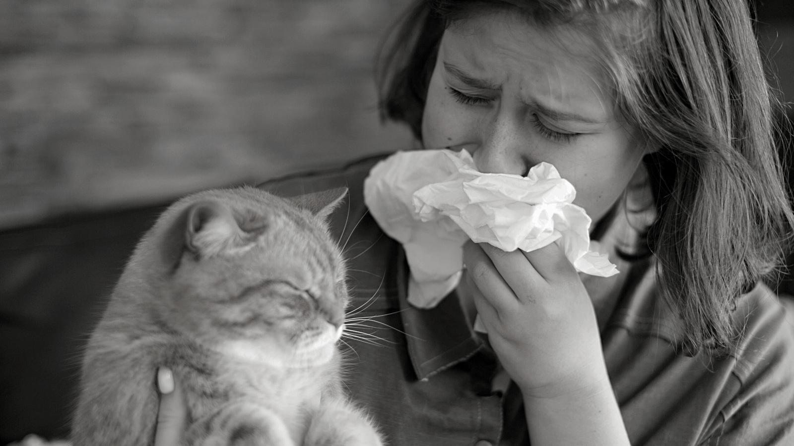 cat allergy treatment