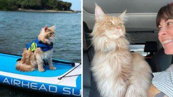 adventurous cat