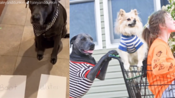 seizure sniffing dog